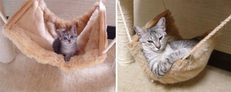 Just a cat in a hammock.