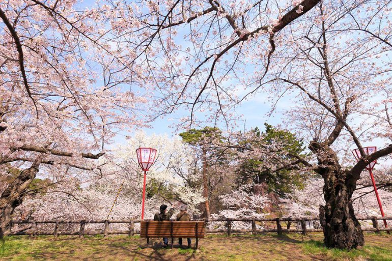 spring-japan-cherry-blossoms-national-geographics-16