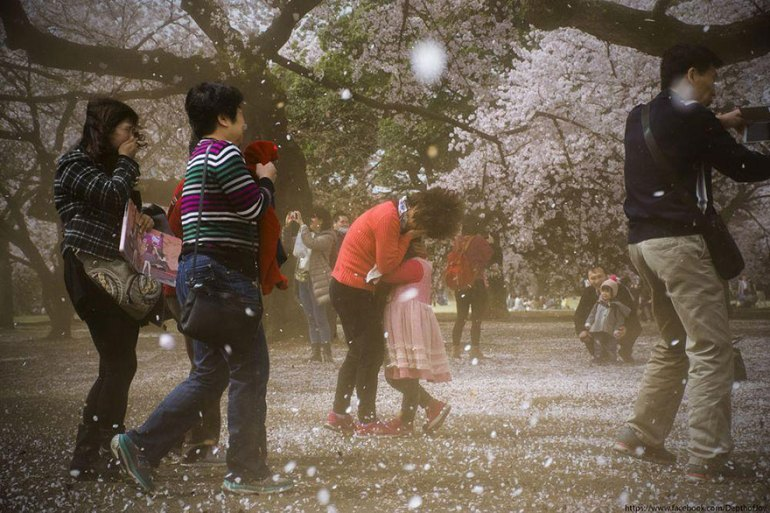 spring-japan-cherry-blossoms-national-geographics-17
