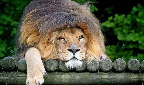 It's tough being King.