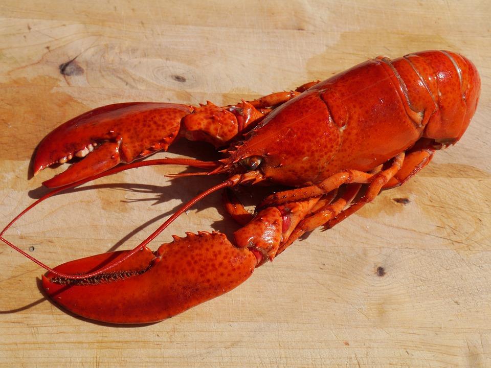 la Suisse interdit de plonger les homards dans l'eau bouillante.