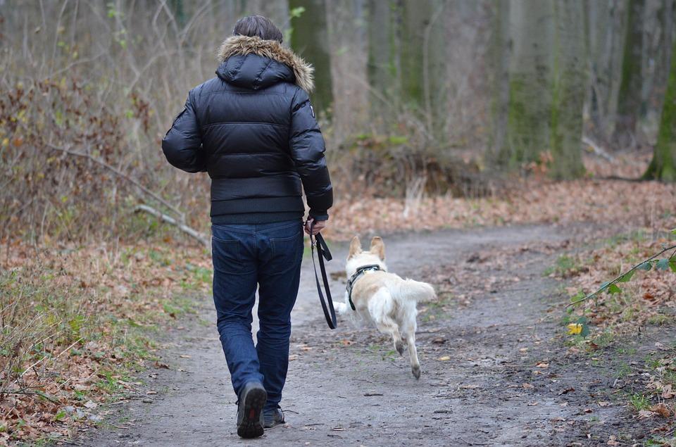 Promener son chien sans laisse, ce que dit la loi