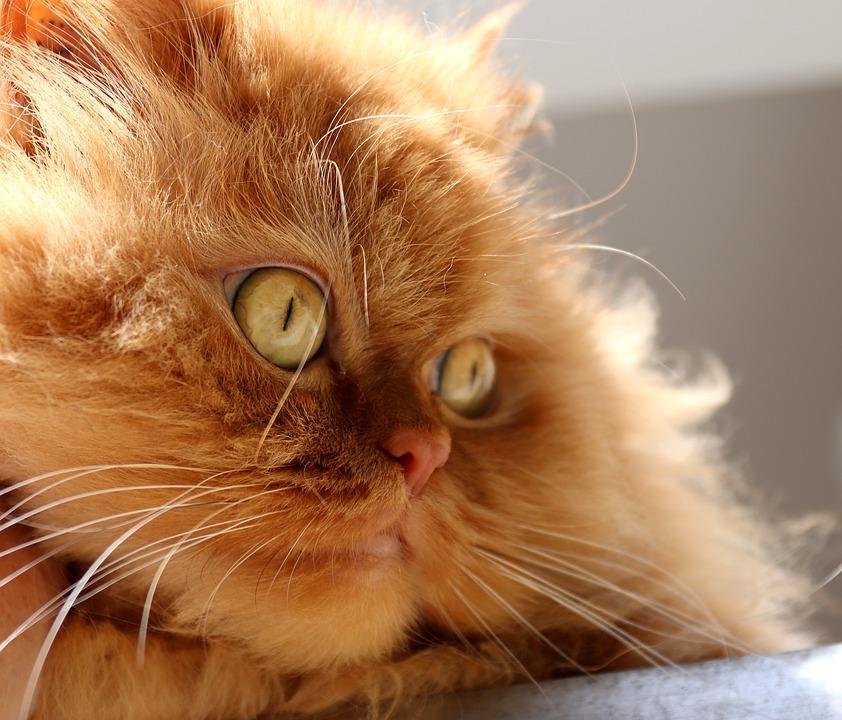 Petits bobos chez le chat, quelques astuces
