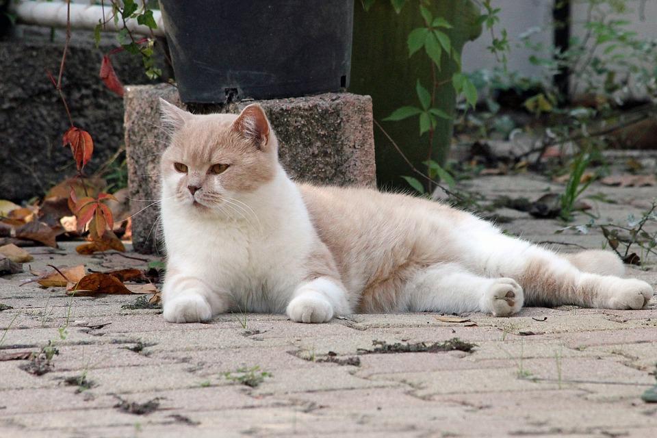 Sida du chat : questions et réponses