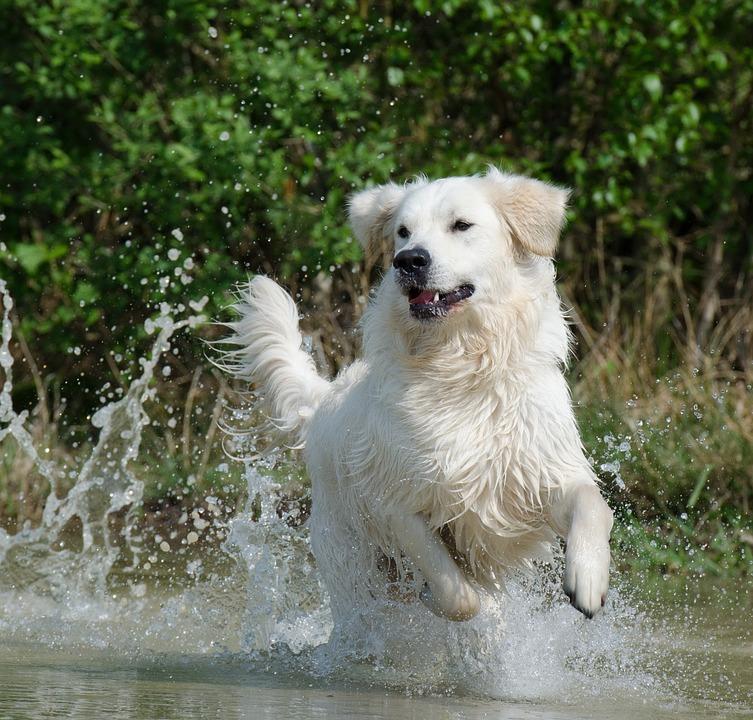 Les cyanobactéries : conseils et infos pour profiter des baignades avec votre chien