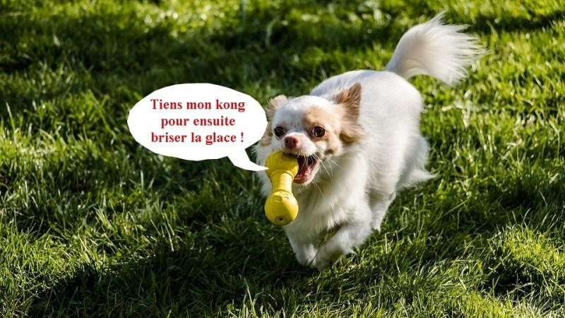recette chien kong glacé