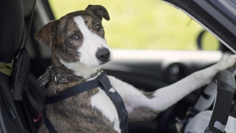 Article juridique voyager avec son animal