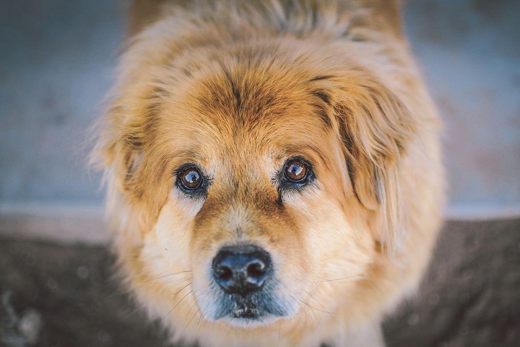 Quelle place pour les animaux dans une copropriété?