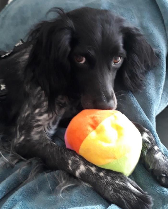 Elle sauve une chienne maltraitée et se trouve condamnée pour vol