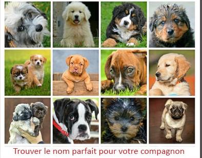Prénoms 2020 : chiens,chats,Nacs, ou autres, une lettre pour un nom