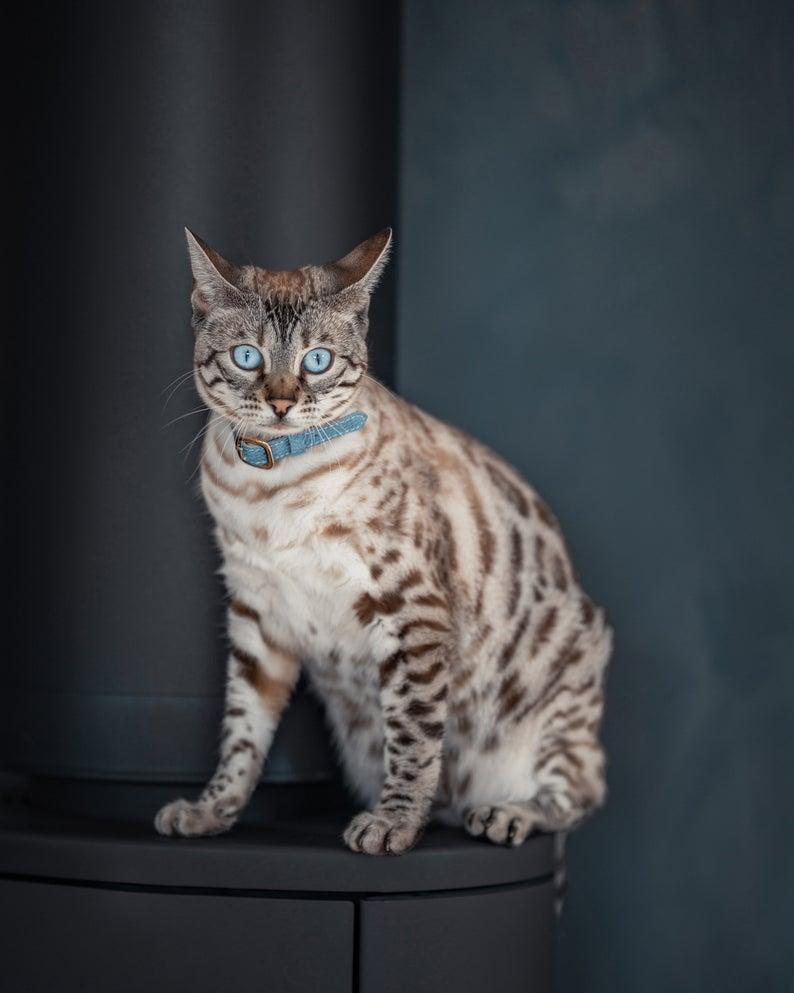 Mettre un collier à votre chat est-il dangereux ?