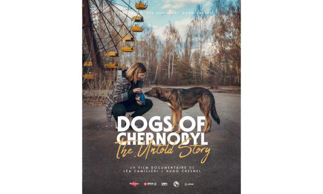 Tchernobyl : Zoom sur la combativité des animaux présents sur le site