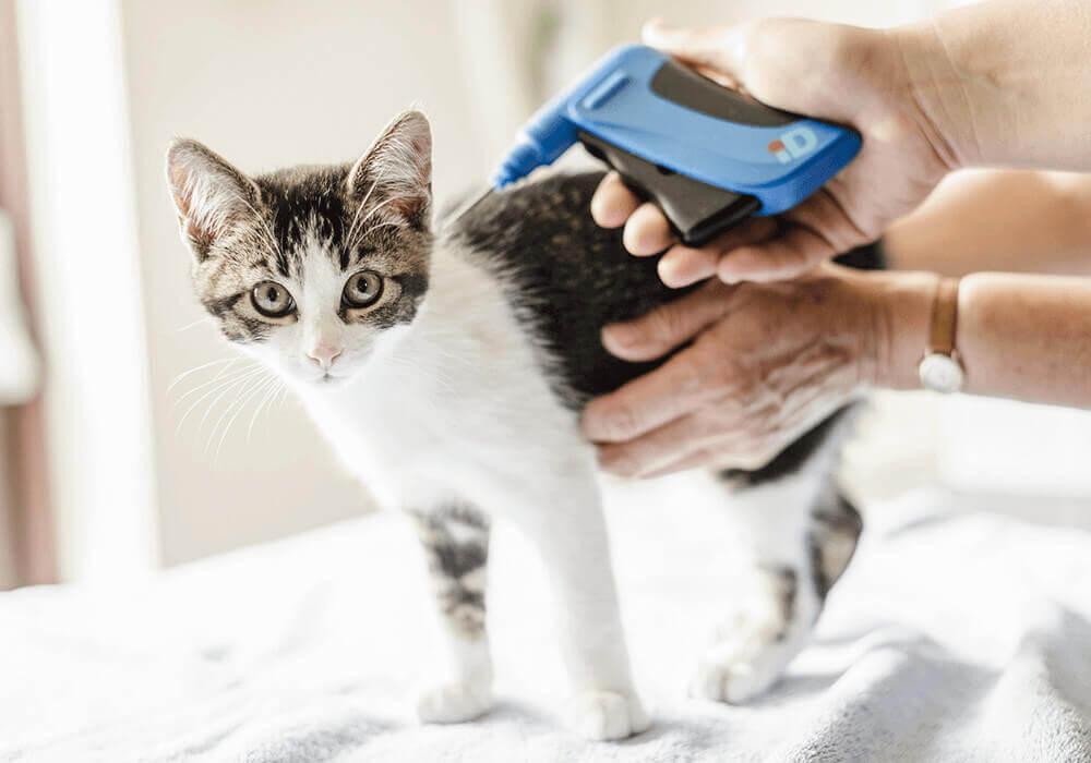 Identification chien et chat : l'importance de la traçabilité de la puce