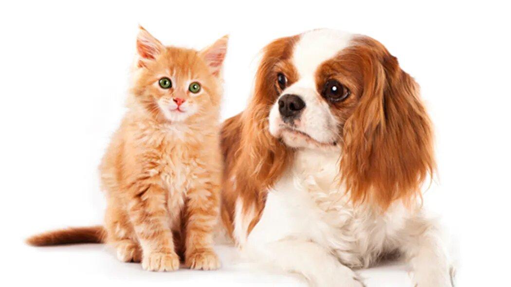 L'argile : un vrai bénéfice chez le chien et le chat