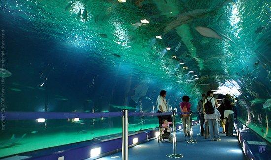 Návštěvníci procházejí skleněným tunelem (zdroj: feelporto.com)