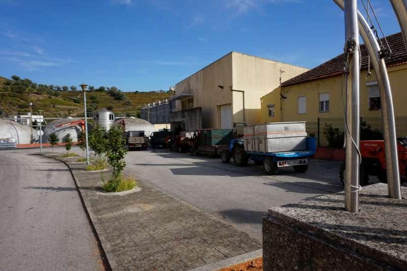 V Porto Réccua Vinhos vykupují révu od místních vinařů. Ti musí se svým nákladem vystát frontu u příjmu.