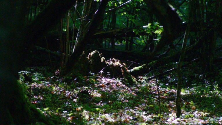 Wyprawa wgłąb Puszczy Białowieskiej. Dzień drugi: odCzerlonki doBiałowieży