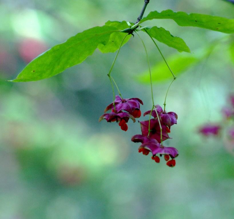 Arboretum w Rogowie i niezwykły kolcosił straszliwy