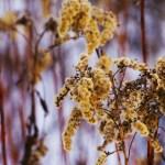 Barwy zimy. Powędrowne impresje