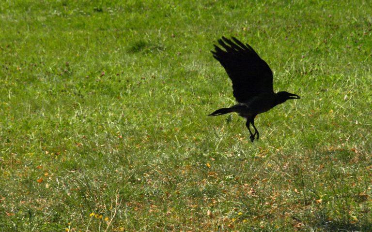 Refleksja nadpowołaniem, czyli dlaczego wrony powinny leczyć dziewczynki. Amoże nie?