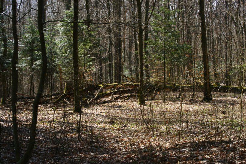 Lasy okolic Tuszyna
