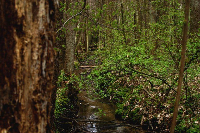 Wędrówki przezŁódzkie #1: Rezerwat Grądy nadLindą
