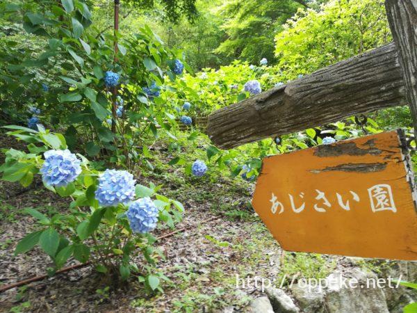 神戸森林植物園,あじさい園