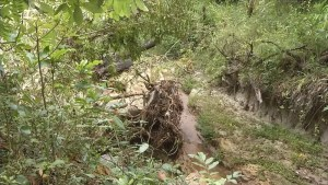 Corpo em decomposição em São José do Rio Preto