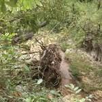 Corpo em decomposição é encontrado perto de córrego em São José do Rio Preto