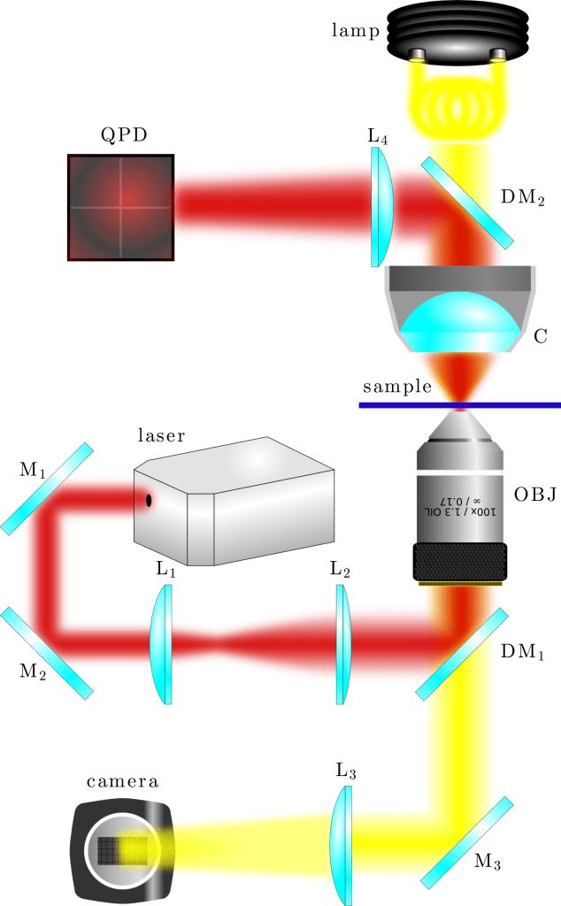 Fig. 1.2 — Basic experimental design