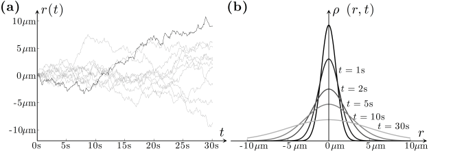 Fig. 7.3 — Theories of Brownian motion: Trajectories and probability distributions