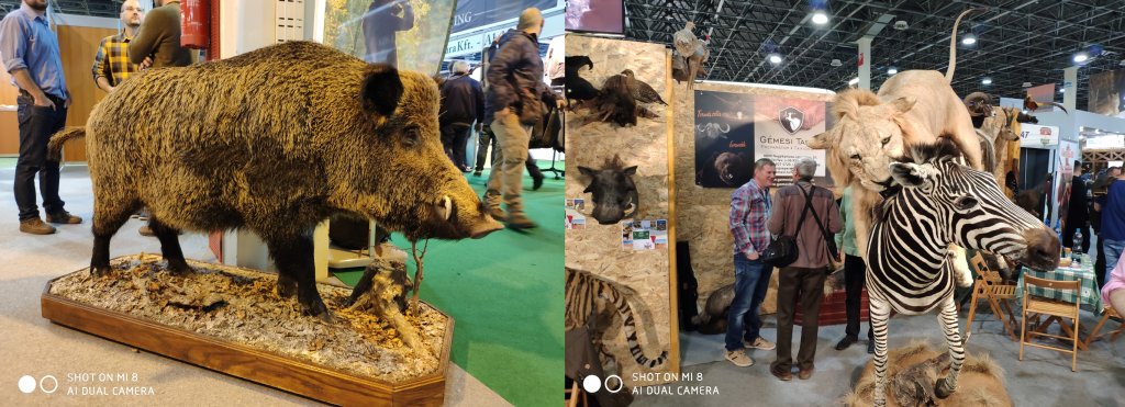 Taxidermy mounts at FeHoVa 2019 Hunting Fair in Budapest, Hungary.