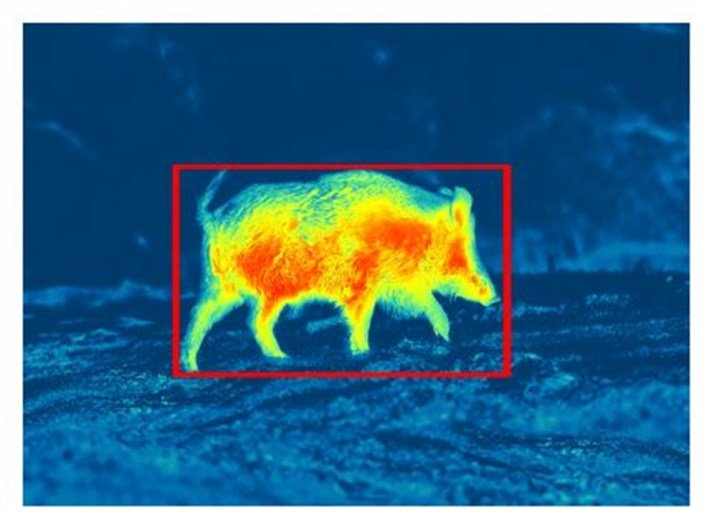 Pulsar Stream Vision 1 - Motion Sensor (source: Pulsar)