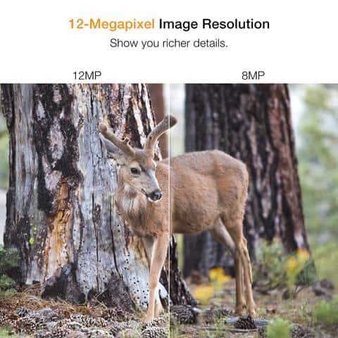 Best Trail Cameras Under $100