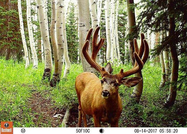 No Glow Infrared Trail Cameras Reviews