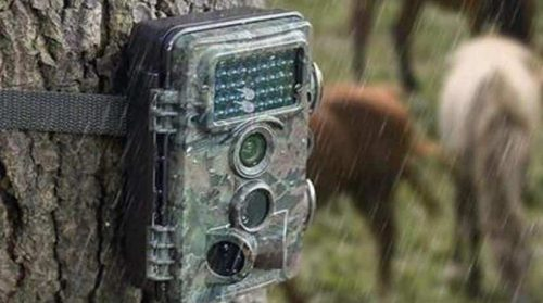Trail Camera Placement Guide