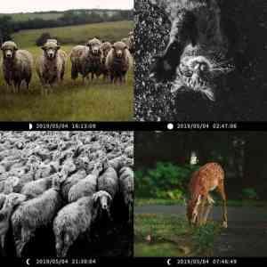 How Do Trail Camera Work