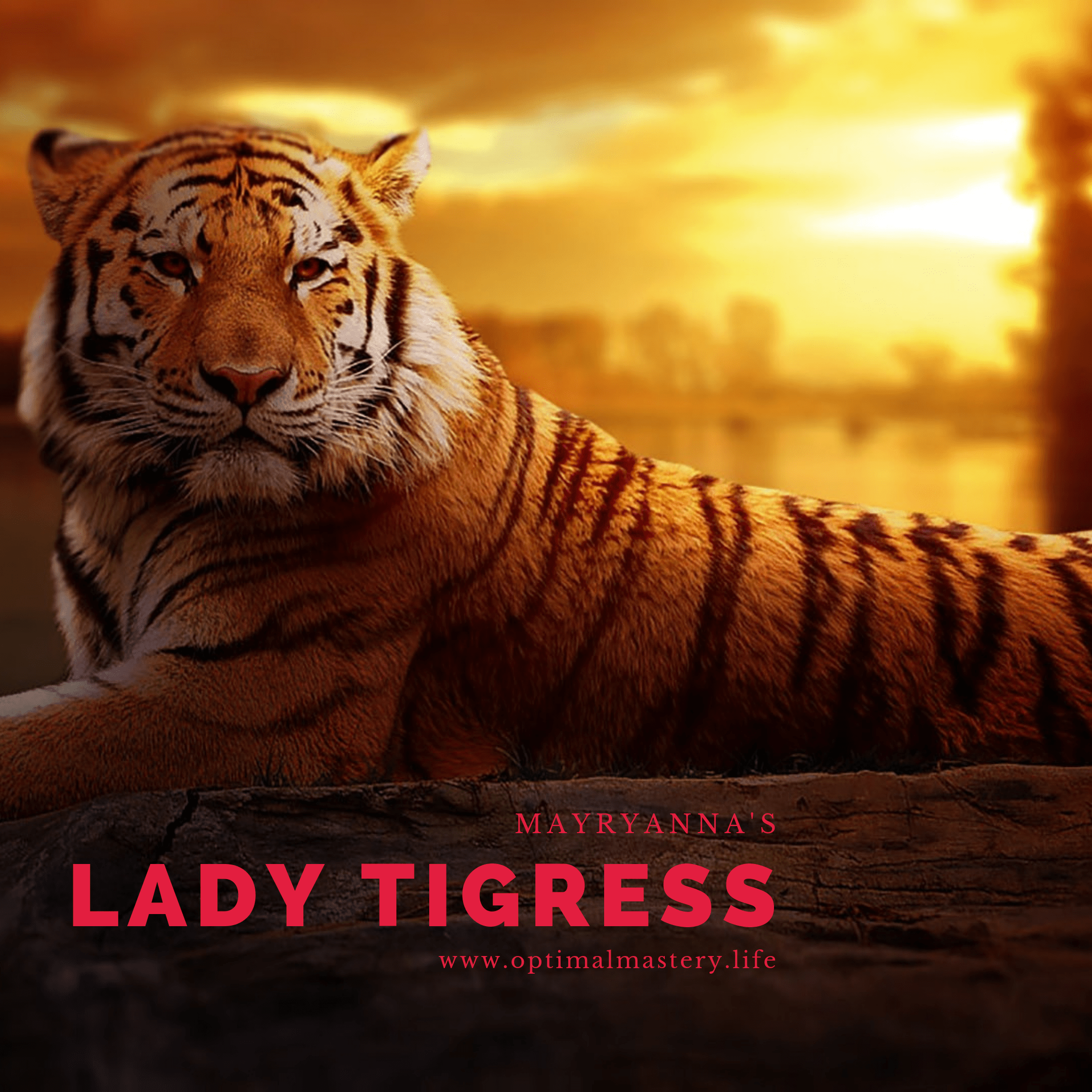 Fortune Dares Poetry Series: Lady Tigress