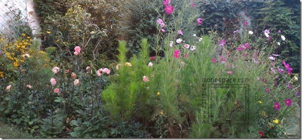 Comment agrandir un jardin : FOISONNACE VEGETALE PETIT JARDN