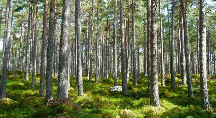 Acheter une forêt