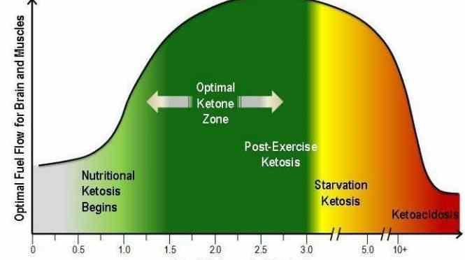 the ketogenic diet | optimising nutrition