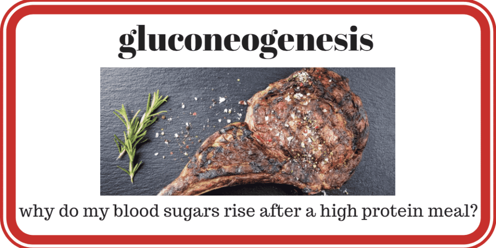 gluconeogenesis... why do my blood sugars rise after high protein meal?