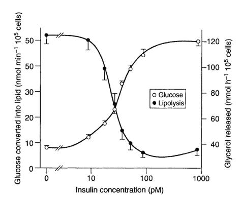 Diagram Of Insulin Gl Application Wiring Diagram