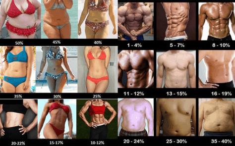 body fat chart.png