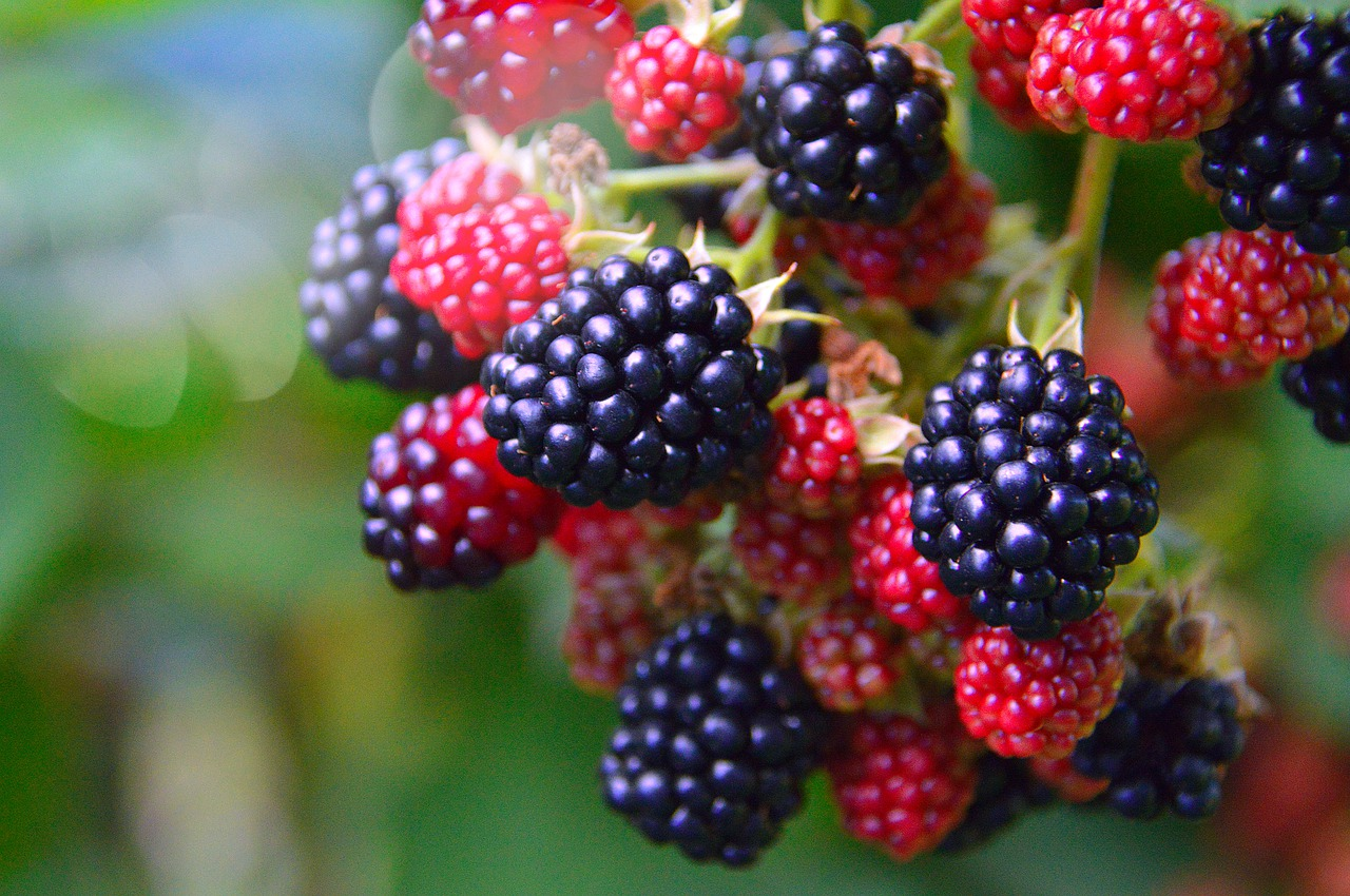 Berries foods for healthy liver