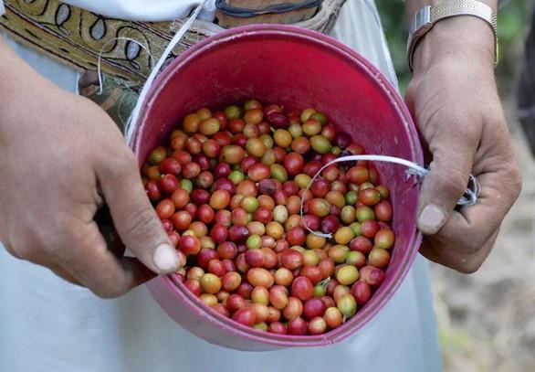 Coffee from Yemen is the world's best.