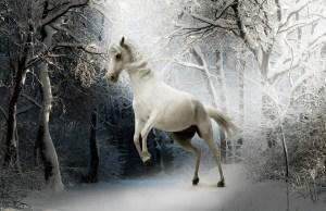 animal, horse, nature