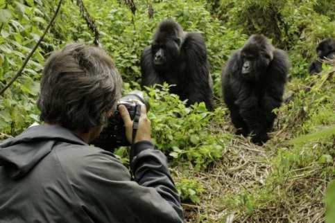 Gorilla Photos