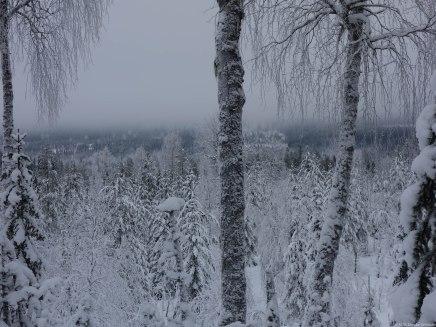 2017-01-22-3