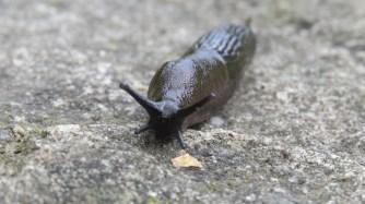 Slug minibeast